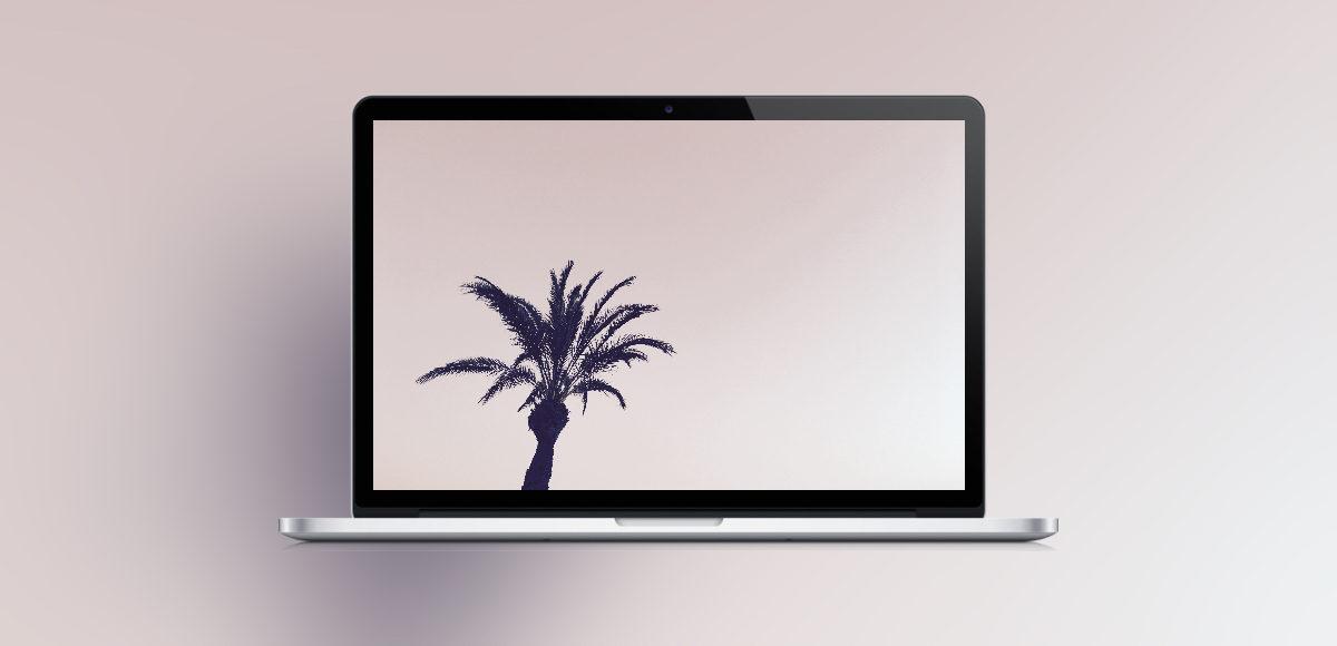 palmtreewallpaper